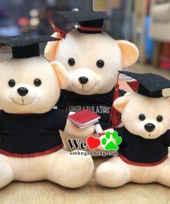 Gấu Tốt Nghiệp Giá Rẻ